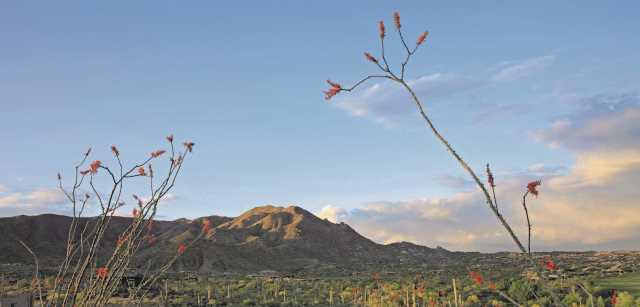 Photo of 11241 E MESQUITE Drive, Scottsdale, AZ 85262